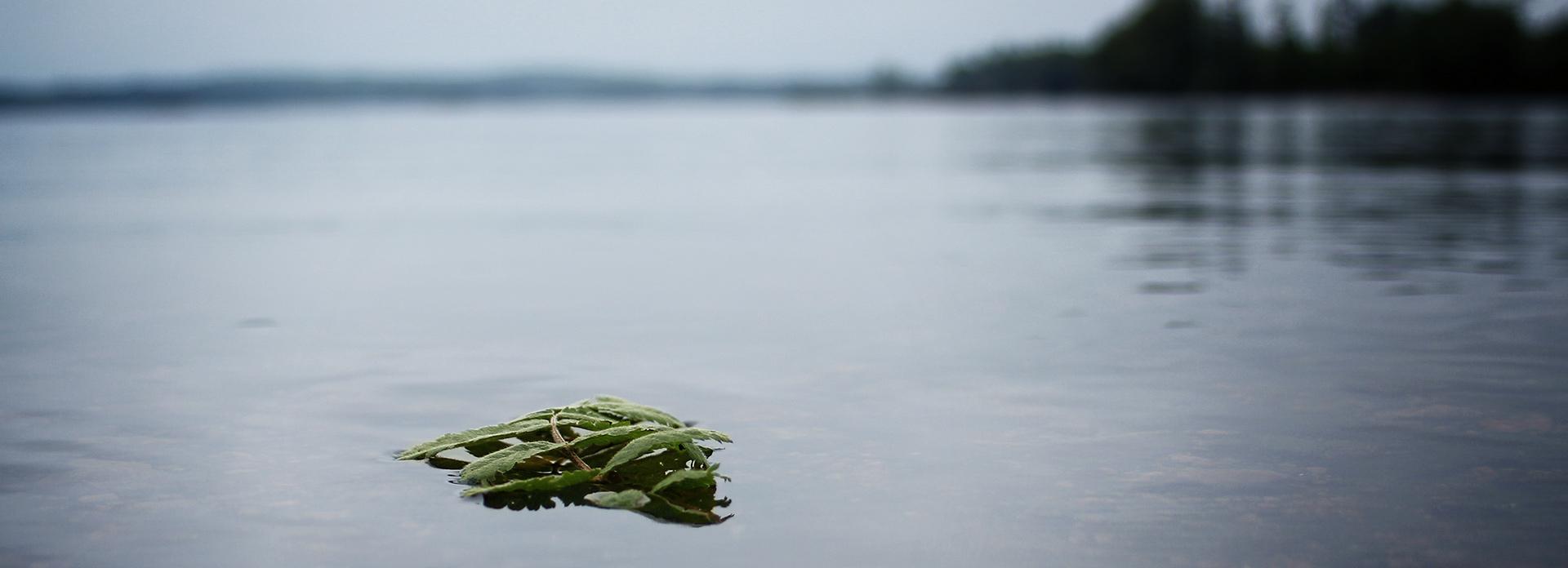 En sjö. Foto Judith Etzold
