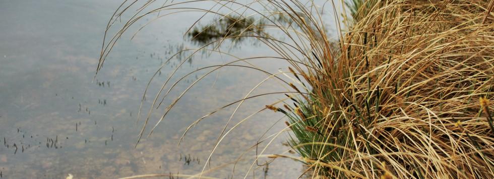 Vid Bolmens strand Foto Judith Etzold
