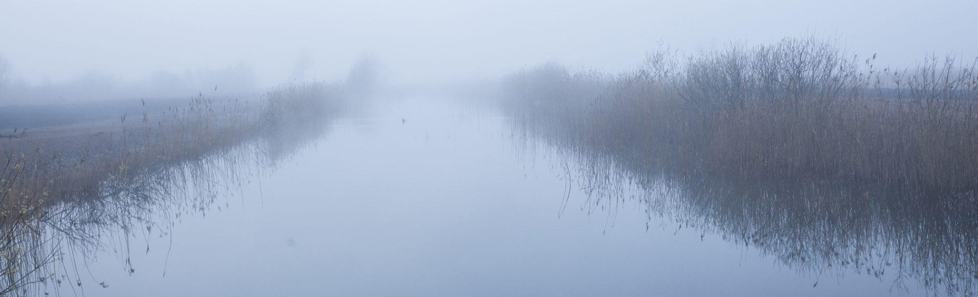 Mossen i dimma