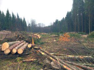 Trädavverkningsplats